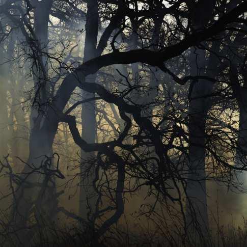 4-Lichtblick-Jane Fulton Alt.jpg